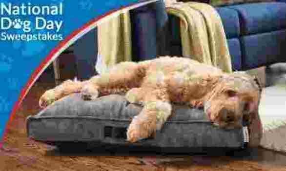 La-Z-Boy-Dog-Day-Sweepstakes