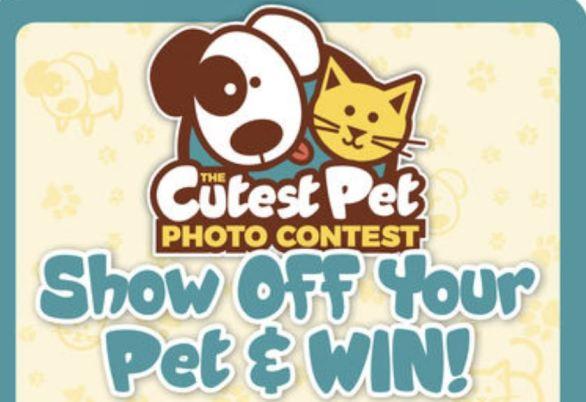 Daytondailynews-Cutest-Pet-Contest