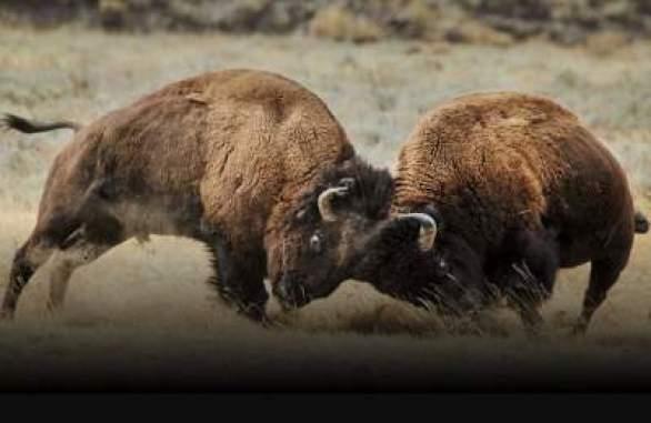 Yellowstone-Live-Sweepstakes