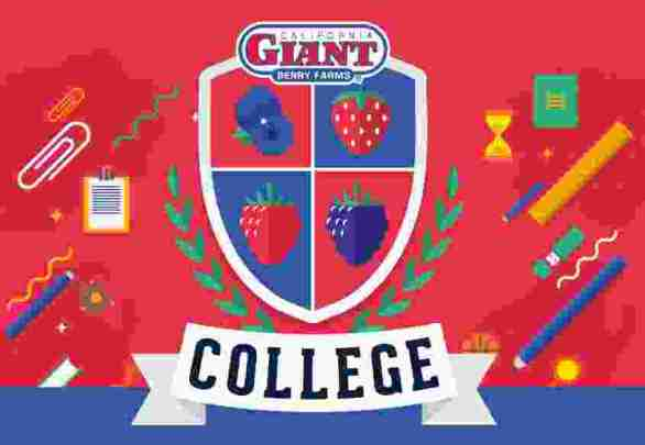 Cal-Giant-College-Sweepstakes