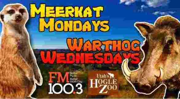 FM100-Meerkat-Mondays-Warthog-Wednesdays-Contest