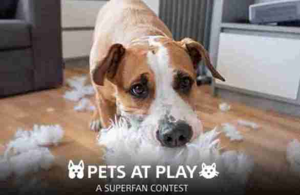 Sony-Rewards-SuperFan-Pets-at-Play-Contest
