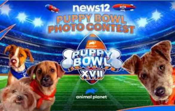 News12-Puppy-Bowl-Contest
