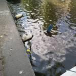 boot lichten Groenburgwal Amsterdam