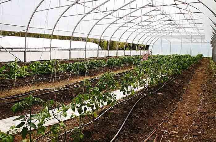 market-gardener5
