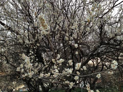 春の訪れを感じる。