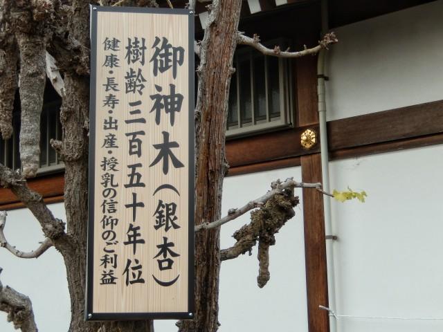富士見市にある水宮神社の御神木