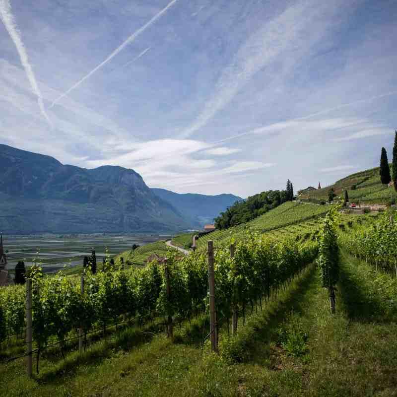 image of a wine vineyard