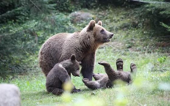 2016-parc-animalier-pyrenees-02-argeles-gazost