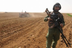 Afghan policemen destroy poppy fields in Nadi Ali district