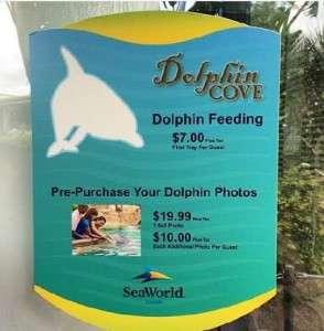 Dolphin Cove Feeding