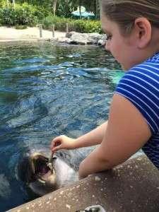 Vivian Dolphin Feeding