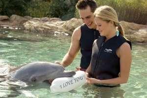 DCO-Dolphin_with_ILoveYouBuoy