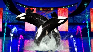 Shamu Light Up The Night