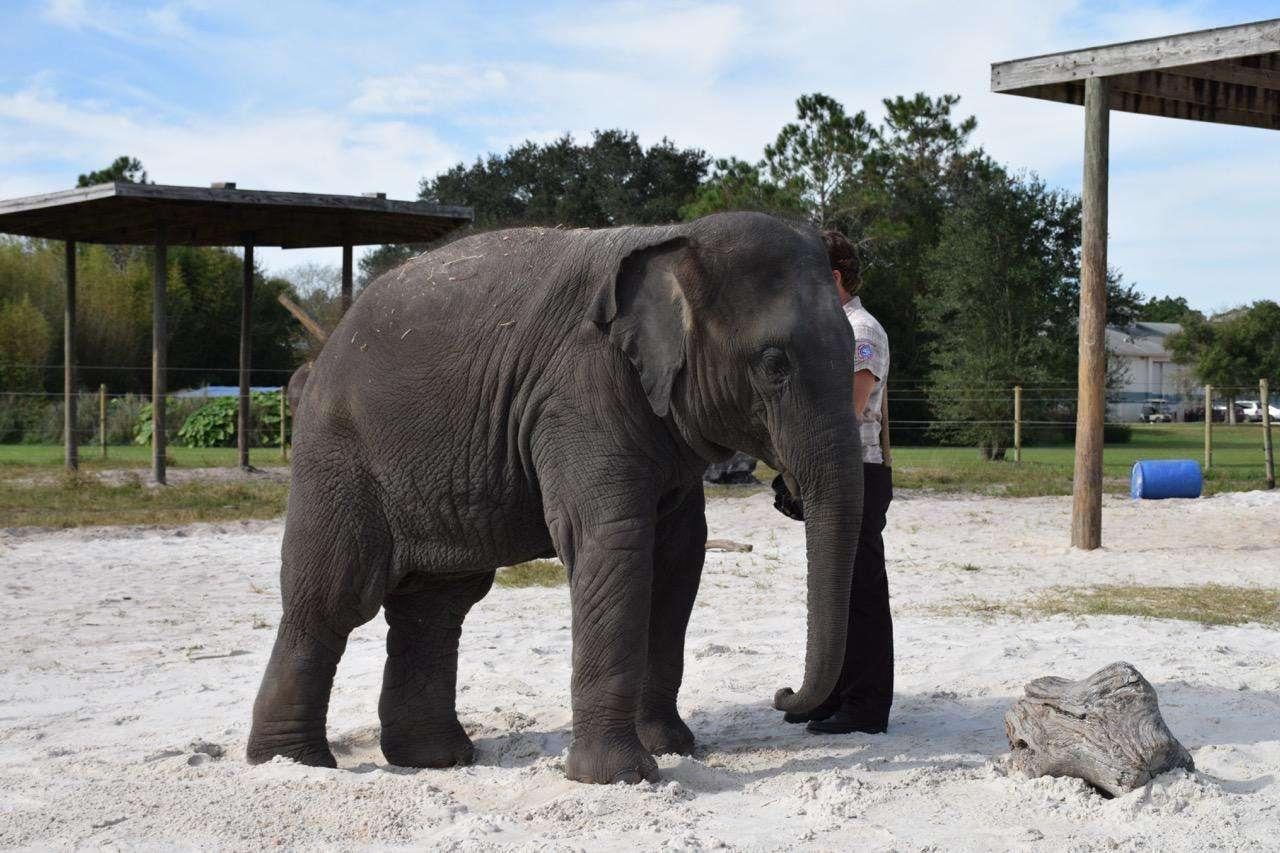 Center for Elephant Conservation