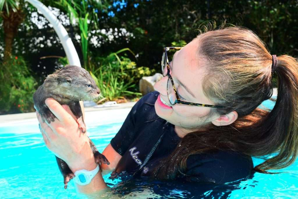 Dade City's Wild Thing Swim With An Otter