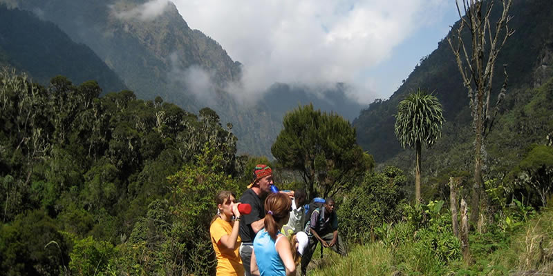 Climbing Rwenzori Mountains
