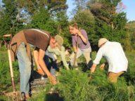 organic farming ban fda