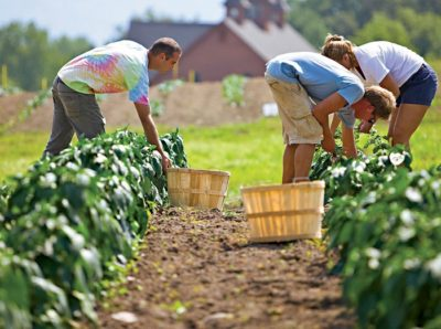 organic farming fda