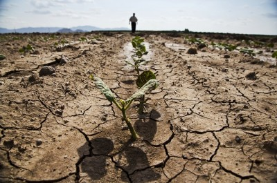Surviving A Drought On Your Homestead