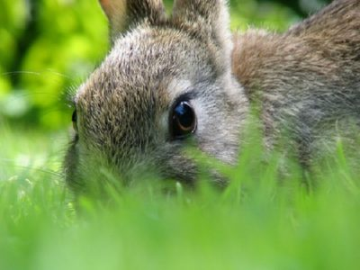 9 Tricks To Keep Your Garden Animal-Free -- Without A Fence