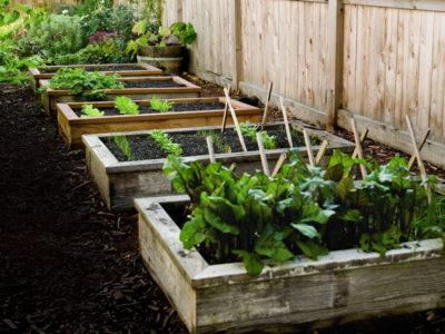 Grow A Great Garden Even In A Drought