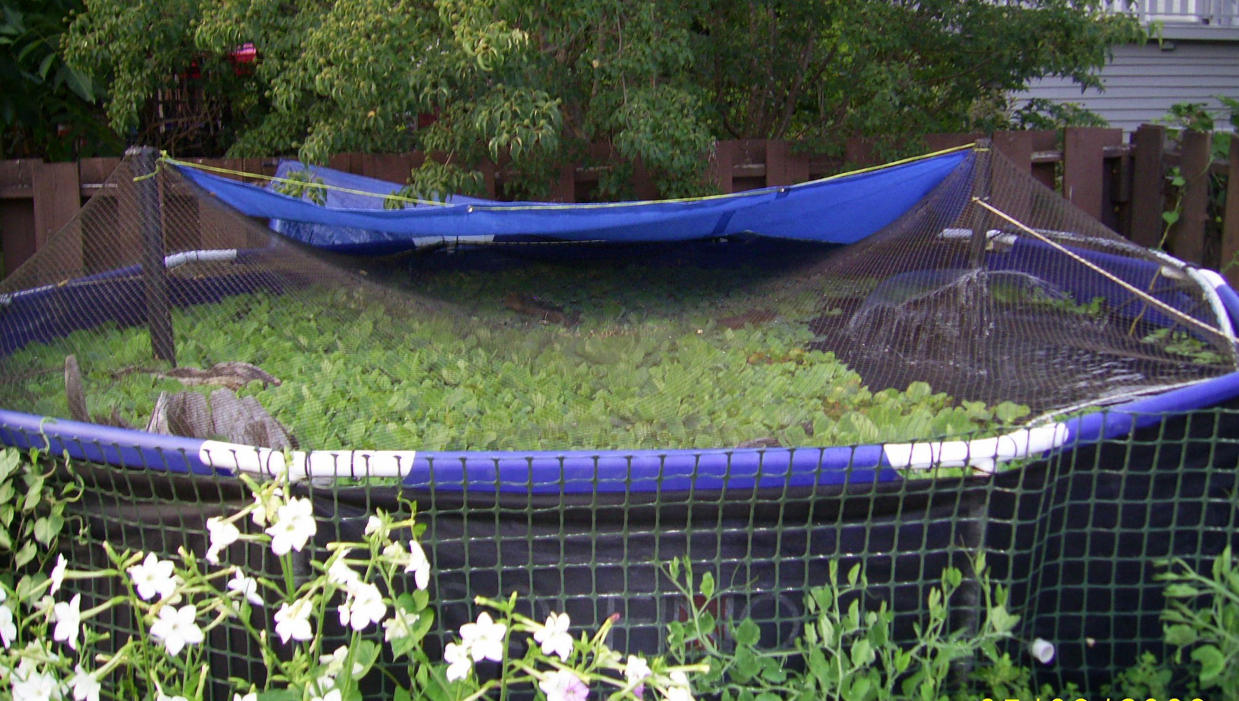 Small Pond Fish Farming