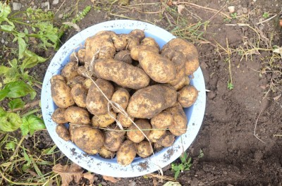 Completely, 100 Percent Off-Grid: 9 Essential Foods You Should Grow