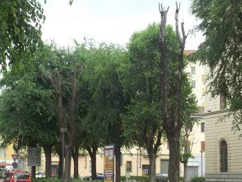 alberi - Q