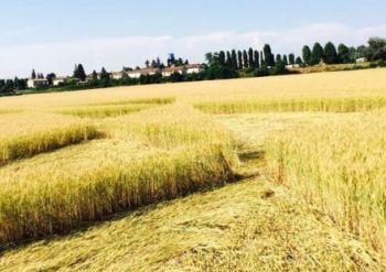 A Pontecurone torna il mistero dei cerchi nel grano. Chi sarà stato a farli?