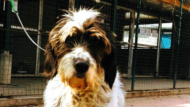 Il Comune di Alessandria diffonde alcuni particolari sul sequestro di oltre 100 cani operato qualche tempo fa