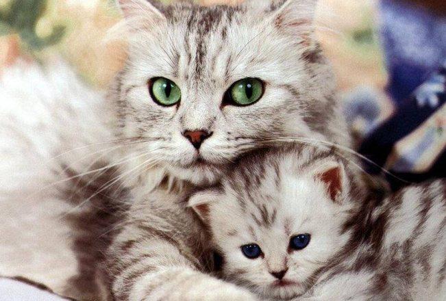 Sabato e domenica a Sanremo un'esposizione internazionale di gatti