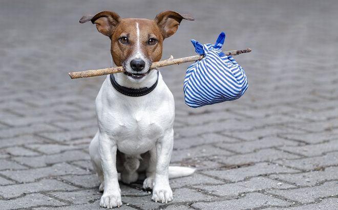 Il Comune di Alessandria spiega cosa fare quando si trova un cane abbandonato