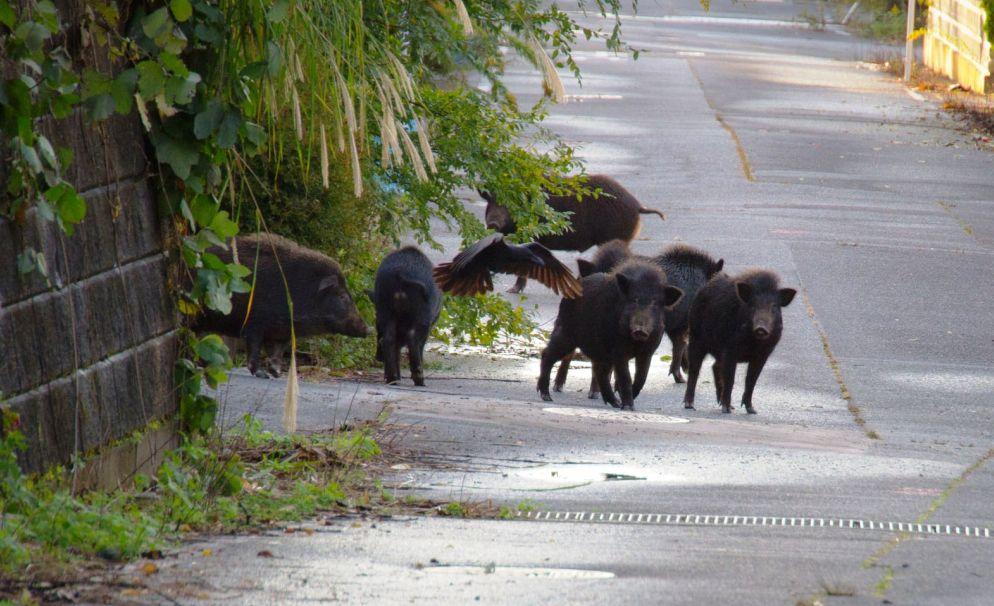 Danni da fauna selvatica: Coldiretti dice basta alle lungaggini ed inefficienze