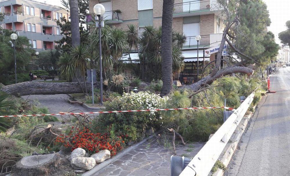 Nella notte crolla un pino nel parco del Museo di Diano Marina, cause e ragioni dell'episodio avvenuto quando non c'era nessuno