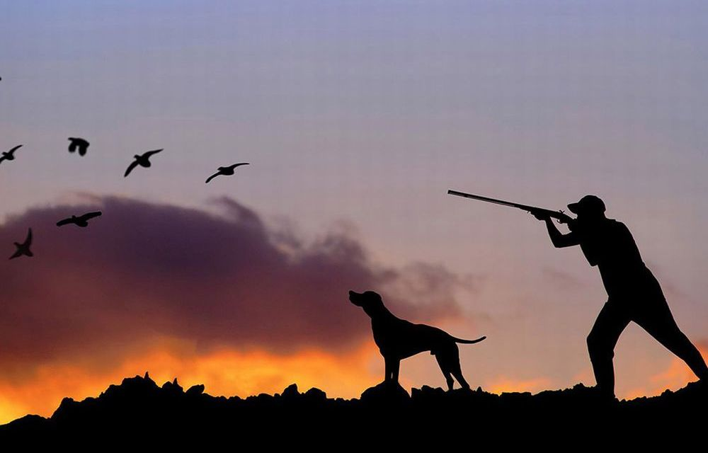 Domenica a Diano Marina c'è la 63esima edizione della Mostra Mercato della caccia