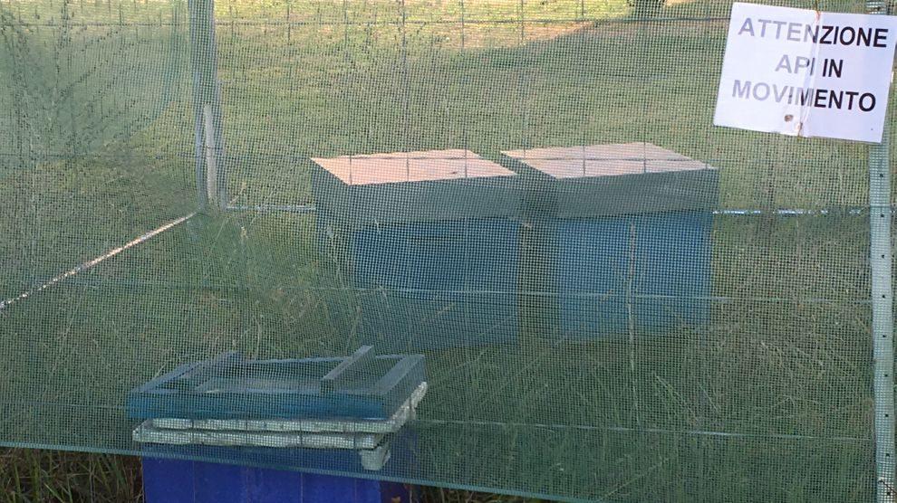 Moria api in provincia di Alessandria, la denuncia della Coldiretti