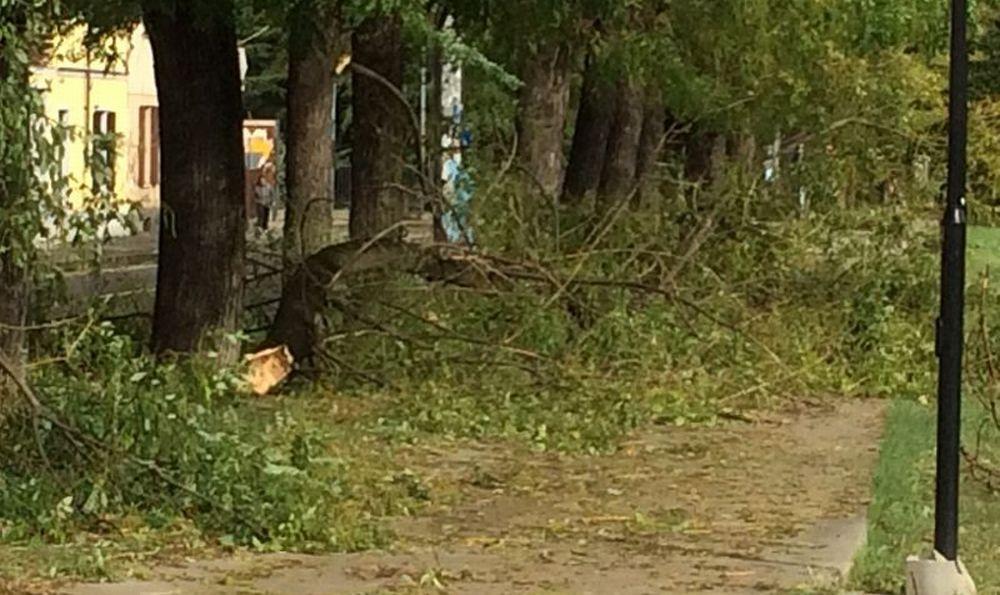 Decine di alberi caduti a Tortona e dintorni a causa del vento e in via Emilia nord….