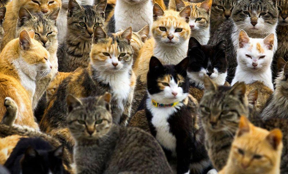 Domenica c'è la Festa al gattile di Alessandria