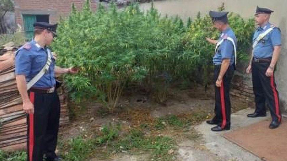 Pozzolo Formigaro, giovane di 26 anni arrestato per coltivazione di sostanze stupefacenti