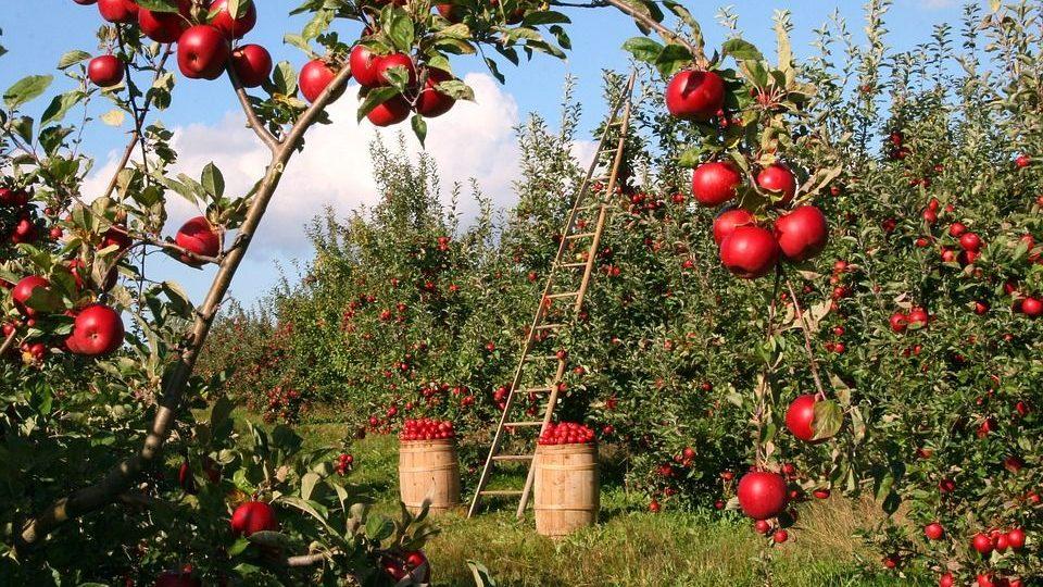 Nel week end a Sale c'è la festa dell'agricoltura. Il programma