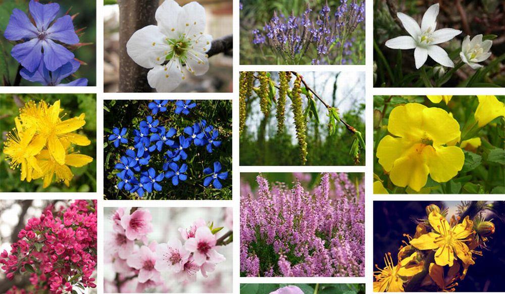 A Tortona un incontro gratuito con Stefania Mignone sui benefici dei fiori