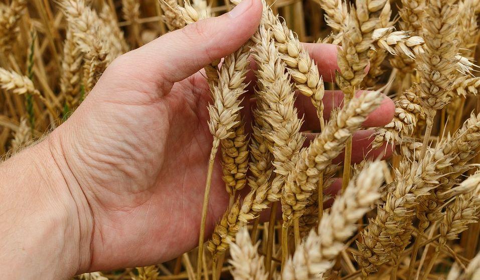 Coronavirus in Piemonte, garantita l'attività agricola e agro-alimentare