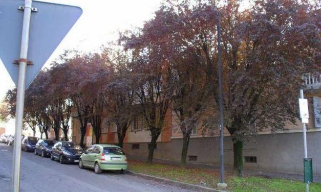 Le piante in via Giuseppe Di Vittorio a Tortona sono malate e pericolose, il Comune le sostituirà