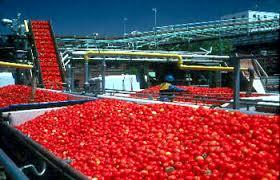 Tomato processing Training