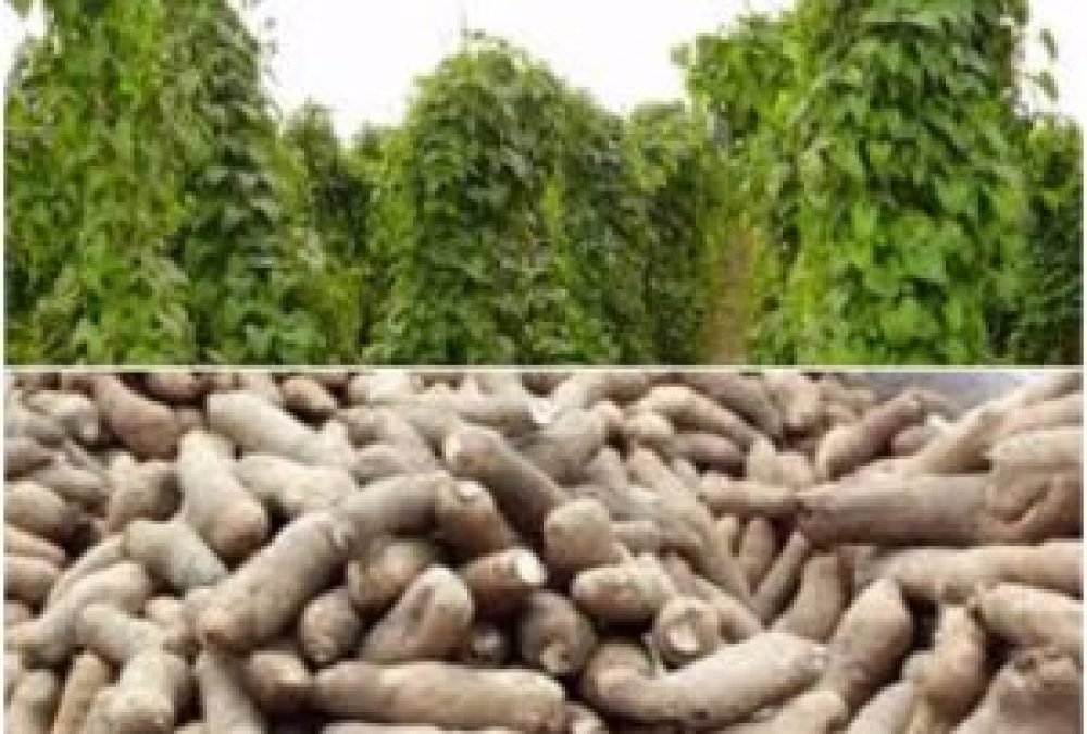 3 Ways You Can Make Yourself Rich in Yam Business