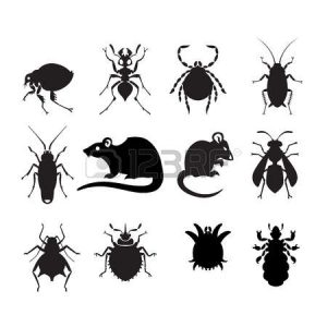 How To Manage Pest And Diseases On The Farm