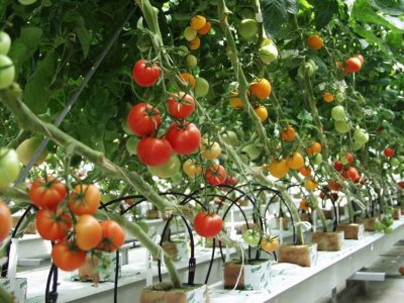 The Advantages of Plant Hybridization