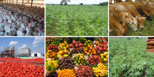 Top 50 Agriculture Business Ideas for Aspiring Entrepreneurs