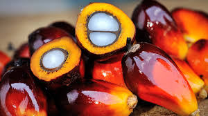 Modern Oil Palm Cultivation  (Part One)